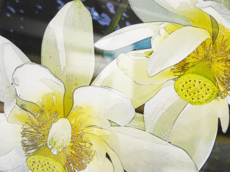 Water Lily Photography Display Yavapai College